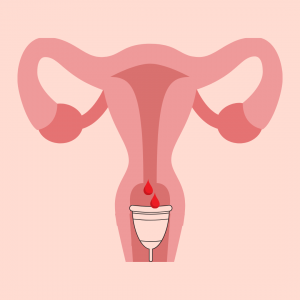 Diagram of the menstrual cup sitting inside the vaginal canal below the cervix where it collects the menstrual fluid.